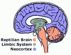 Tres-Cerebros